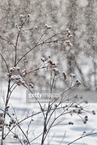 it's snowing : Stock Photo