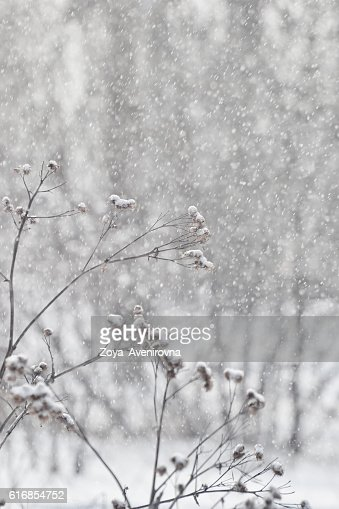 it's snowing : Stock Photo