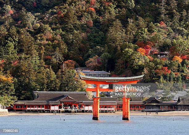 Itsukushima Shrine which was registered as a Japanese world cultural heritage by UNESCO in December 1996 is covered by colored leaves in Miyajima...