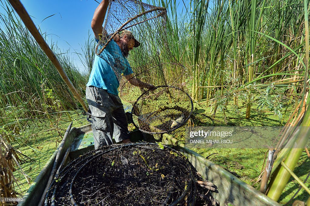 Ivan, a local fisherman looks at a fishing net on a boat at Mila 23 village in the heart of the Danube Delta on July 22, 2013. The Danube delta hosts over 300 species of birds as well as 45 freshwater fish species in its numerous lakes and marshes.