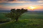 Ivinghoe Beacon