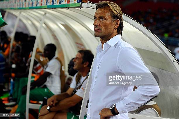 Ivory Coast's head coach Renard Herve during the 2015 African Cup of Nations semifinal football match between Democratic Republic of the Congo and...