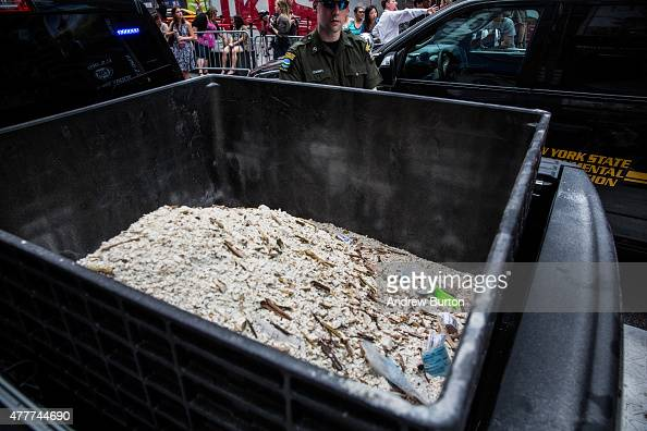 Ivory dust created by destroyed ivory trinkets confiscated by law enforcement sits in a bucket in Times Square on June 19 2015 in New York City The...