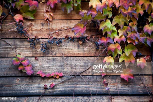 Ivy And Berries On Wood During Autumn