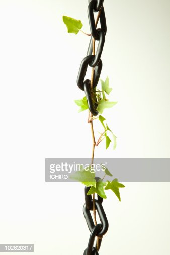 Ivy and black chains. : Foto de stock
