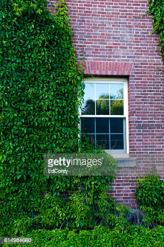 Ivy Covered Dorm : Foto stock