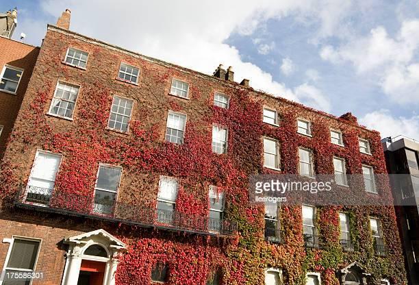 Ivy カバージョージアンスタイルの建物でダブリン