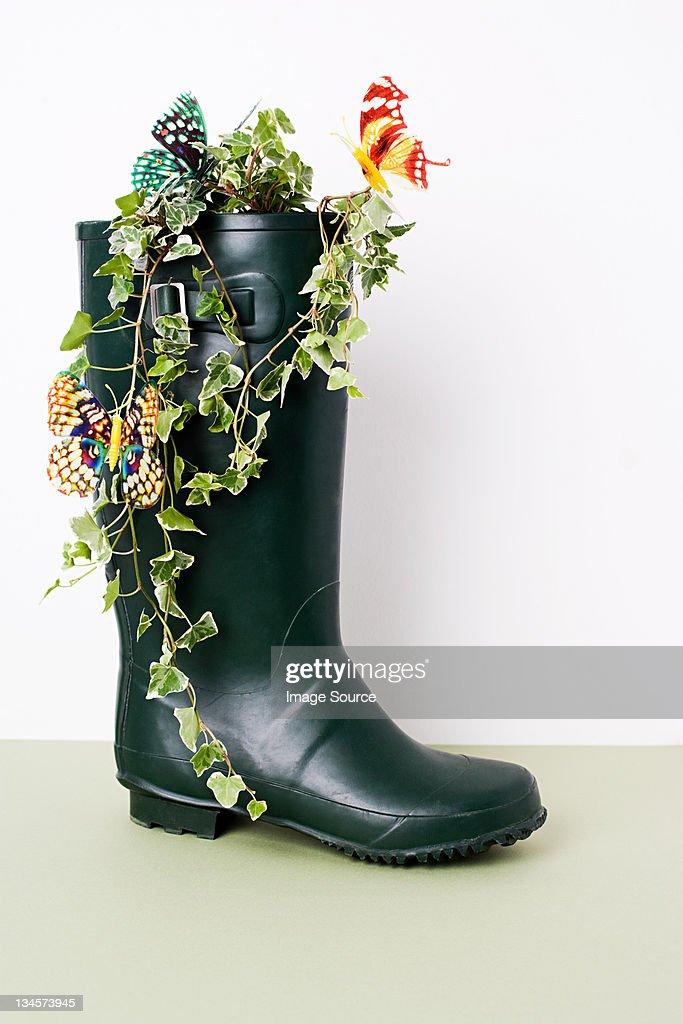 Ivy growing in Wellington boot : Stock Photo