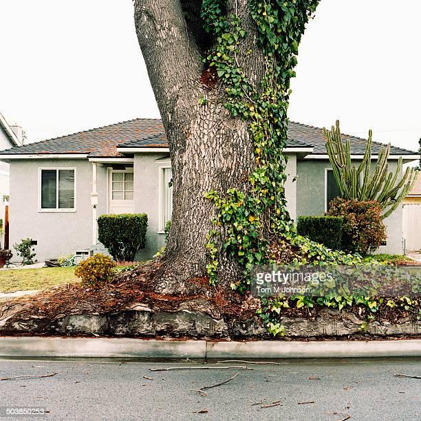 Ivy growing on tree on suburban street