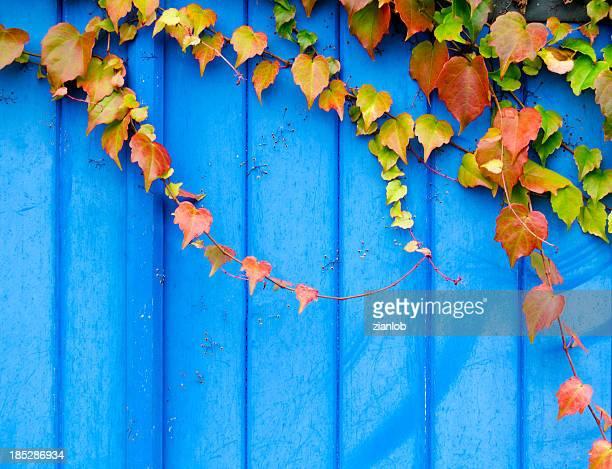 Ivy an der Tür