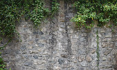 ivy growing on stone wall texture
