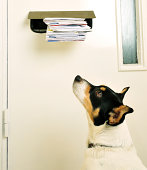 Jack Russell and the Post