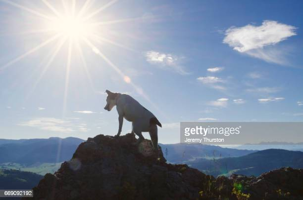 Jack Russell Dog reaches mountain top summit on beautiful sunny day