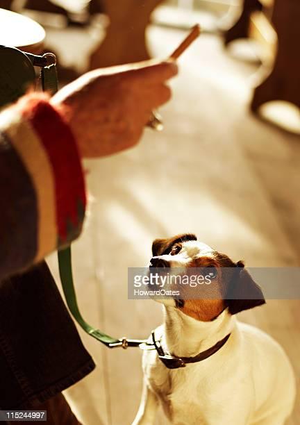 jack russell dog training