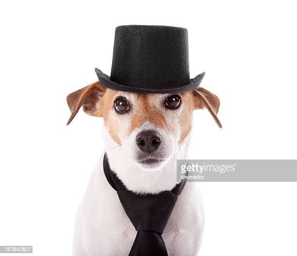 Jack Russell Terrier Head Shot Tophat and Tie