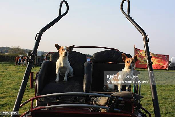 Jack Russell Terriers Sitting On Vehicle Seats Against Sky