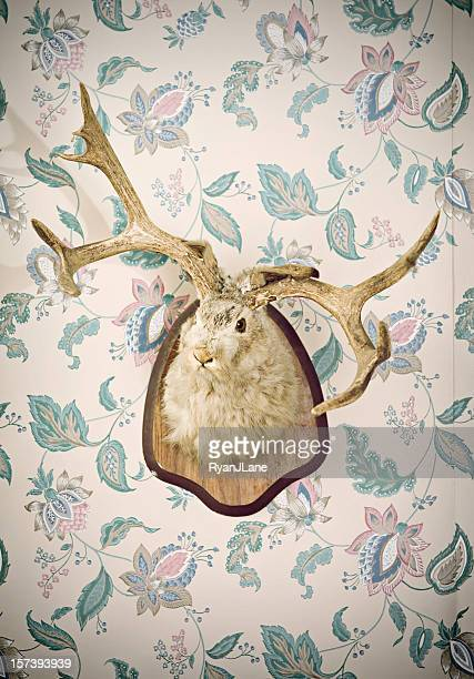 Jackalope Head Taxidermy