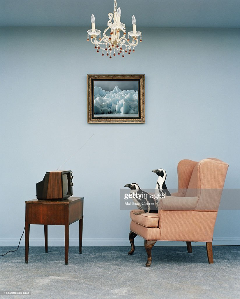 Jackass penguins on chair watching television, side view : Stock Photo