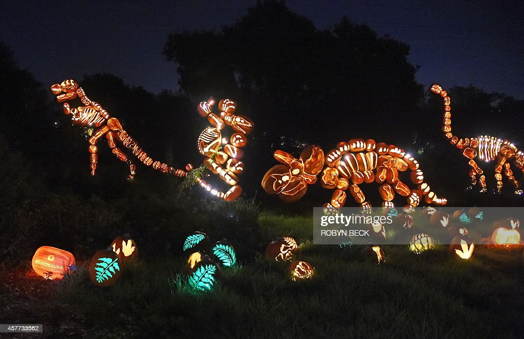 Jacko'lanterns are displayed at the 'Rise of the JackO'Lanterns'' exhibition featuring more than 5000 handcarved illuminated pumpkins created by...