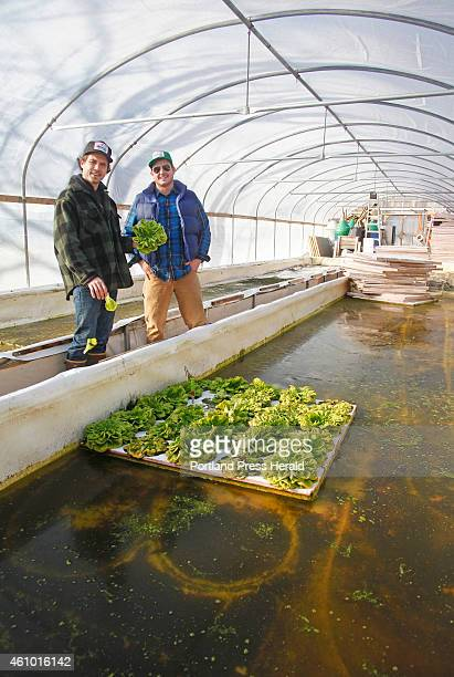 Jackson McLeod and Tyler Gaudet both of Portland examine leftover lettuce from last season in the greenhouse in North Yarmouth where they run their...