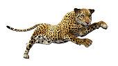 Jaguar leaps, isolated on white background