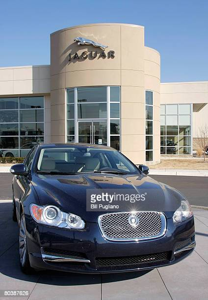 Seated Jaguar Stock Photos And Pictures Getty Images