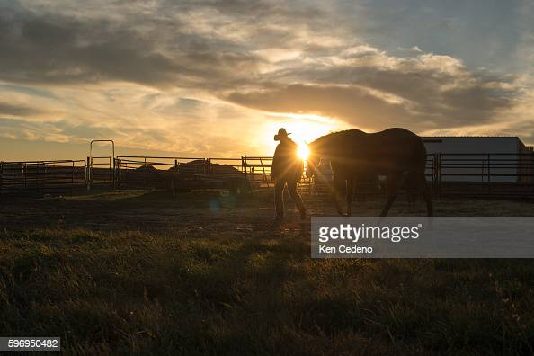 Jake Henderson walks his horse at sunset after an all day horse drive taking 20 1yearold Percheron geldings down 20 miles of roads and across the...