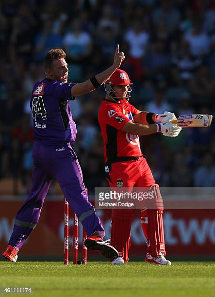 Jake Reed of the Hurricanes appeals unsuccessfully for the wicket of Aaron Finch of the Renegades during the Big Bash League match between the Hobart...