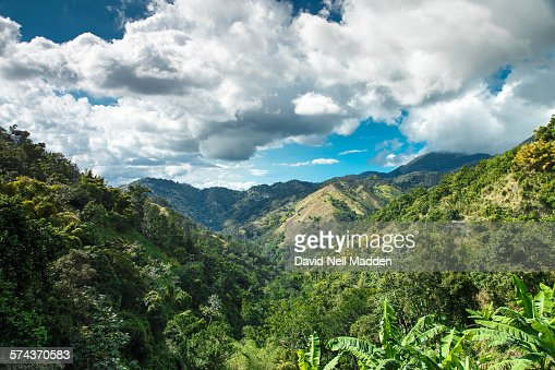 Jamaica blue mountains