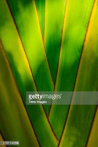 Jamaica, Close-up of palm tree