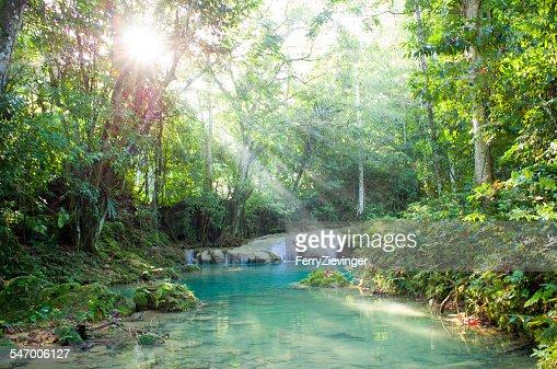 Jamaica, Morning sunbeam in rainforest, river in foreground