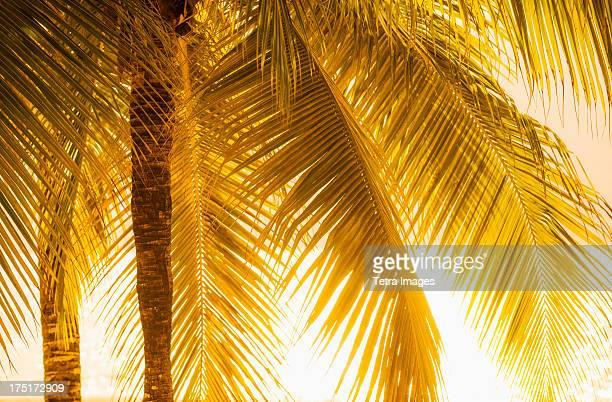 Jamaica, Palm tree at sunset