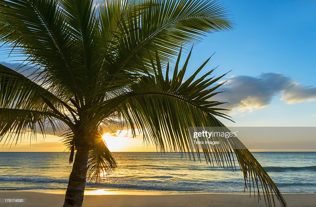 Jamaica, Palm tree on beach at sunset