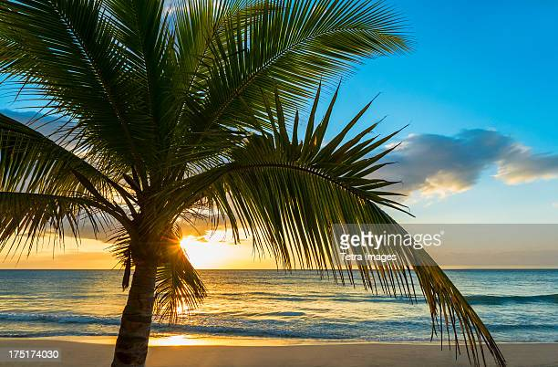 Jamaica, Palm tree on beach at sunset