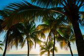 Jamaica, Palm trees and sea