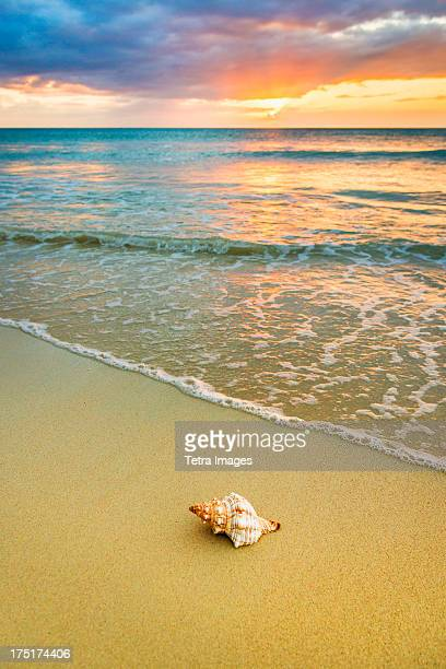Jamaica, Shell on beach at sunset