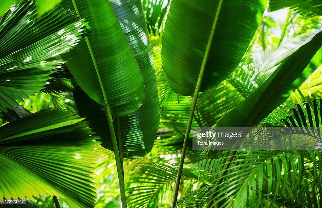 Jamaica, Tropical foliage