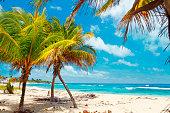 Coconut palms on caribbean beach