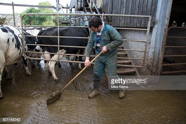 Cow Shit Stock Photos And Pictures Getty Images