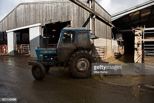 James Clark scraping the muck out with a tractor With approximately 340 in the herd muck is a constant in the lives of the staff here It all must be...