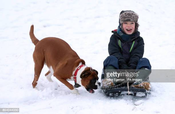 James Egerton is pulled on his sledge by his dog in Bingham Nottinghamshire