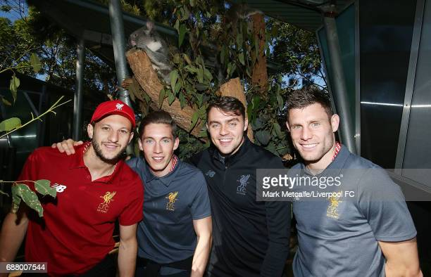 James Milner Adam Lallana Harry Wilson and Connor Randall pose with a koala during a Liverpool FC player visit to Taronga Zoo on May 25 2017 in...