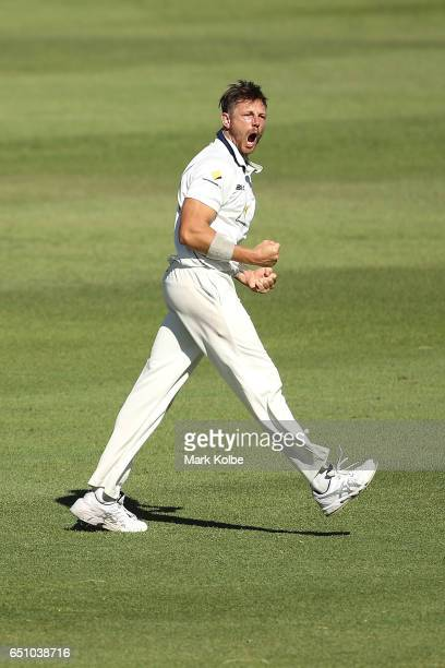 James Pattinson of the Bushrangers celebrates taking the wicket of Josh Inglis of the Warriors during the Sheffield Shield match between Victoria and...