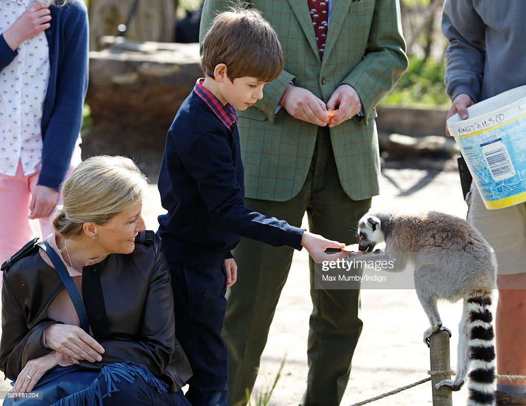 James, Viscount Severn and Sophie, Countess of Wessex feed ring-tailed lemurs during a visit to the Wild Place Project at Bristol Zoo on April 14, 2016 in Bristol, England.