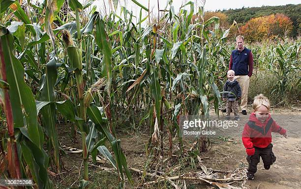 Jamie Freeland of Beacon Hill looked on as sons Collin and Reid romped through the corn maze at Hanson's Farm in Framingham on Saturday Oct 22 2011