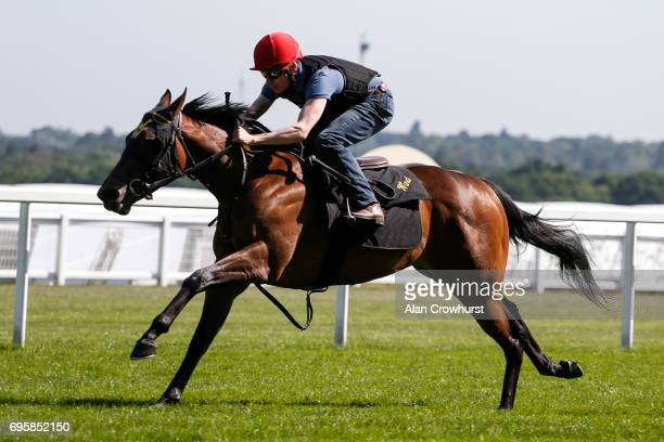 Jamie Spencer riding Elizabeth Darcy have a track gallop at Ascot Racecourse on June 14 2017 in Ascot England