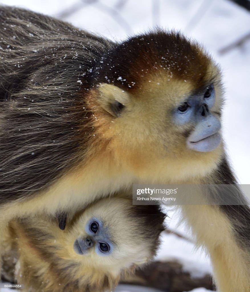 She cute,hot, fist of golden monkey