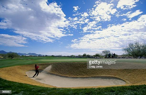 Tiger Woods chips out of the sand trap during the Phoenix Open at the TPC of Scottsdale in Scottsdale Arizona