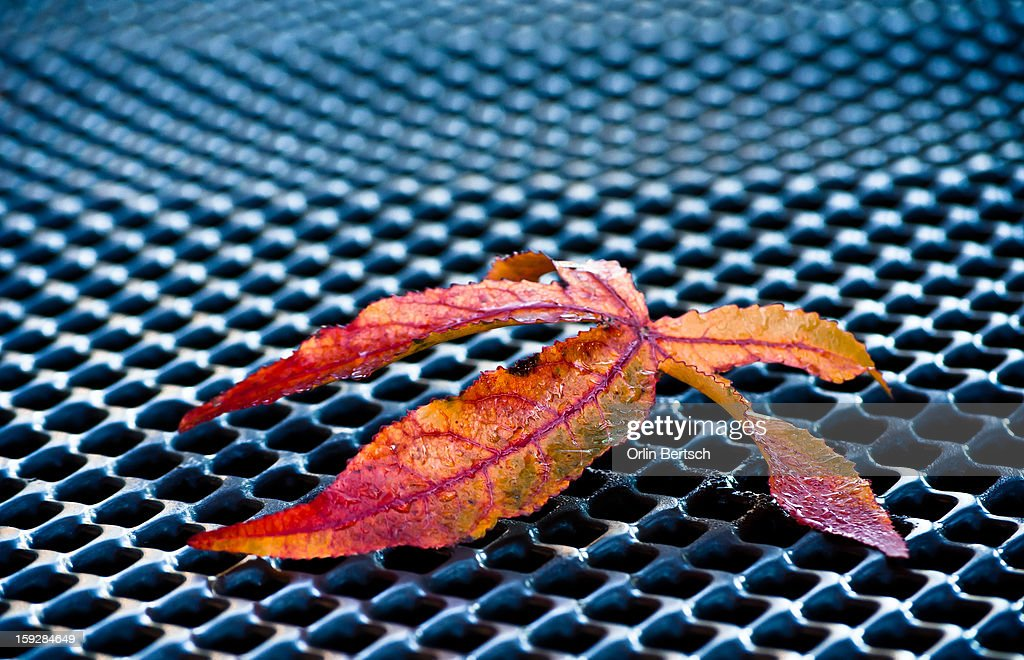 CONTENT] Jan. 1st and 30 degree's for a cold walkabout. Multi-Colored leaves laying on playground grill structured floor.