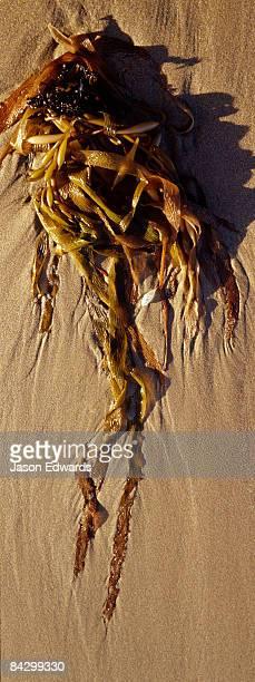 Ocean waves leave beautiful patterns trailing kelp leaves on a beach.